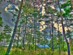 ハイダイナミックレンジ写真 - ススキと木々のせいくらべ@静岡某所