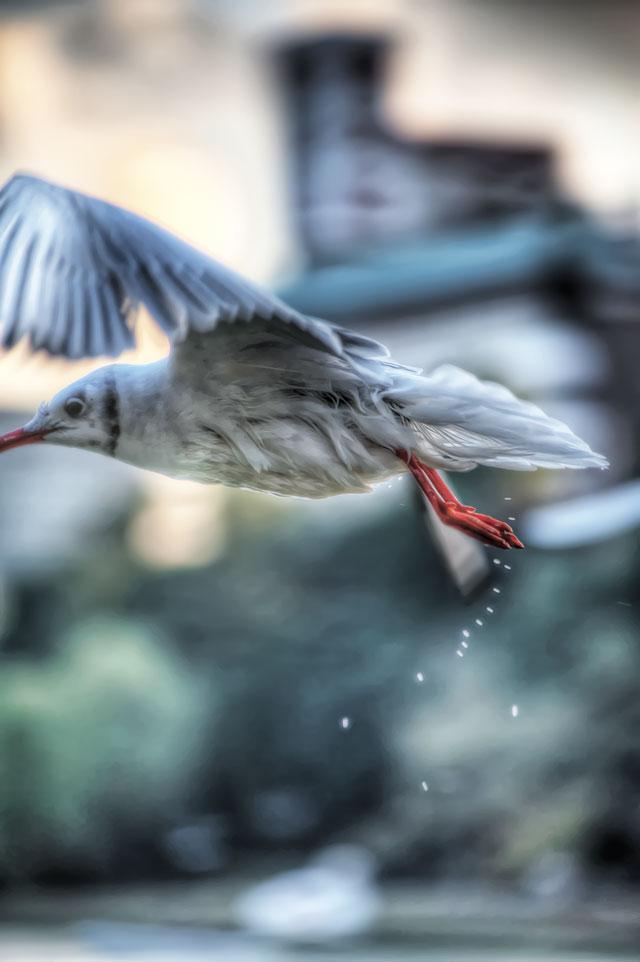 水鳥を上手く捉えるのに最適な条件