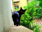 ハイダイナミックレンジ写真 - 現金な猫@平塚