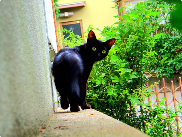 HDR(ハイダイナミックレンジ)cat003.jpg