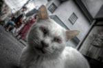 ハイダイナミックレンジ写真 - Appleの言語アイコンがカワイイ