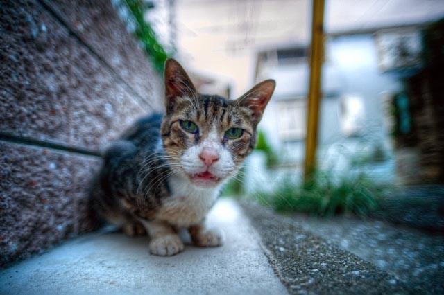 HDR(ハイダイナミックレンジ)小さな事にウダウダいう月間cat005.jpg