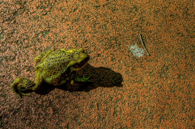 HDR(ハイダイナミックレンジ)先月のストックフォト収入を各社比較検討frog01.jpg