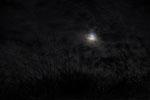 ススキと月と@津南キャンプ場
