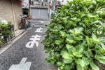 ハイダイナミックレンジ写真 - 5月のストックフォト売り上げ報告〜