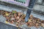 ハイダイナミックレンジ写真 - 早朝の秋@尾久