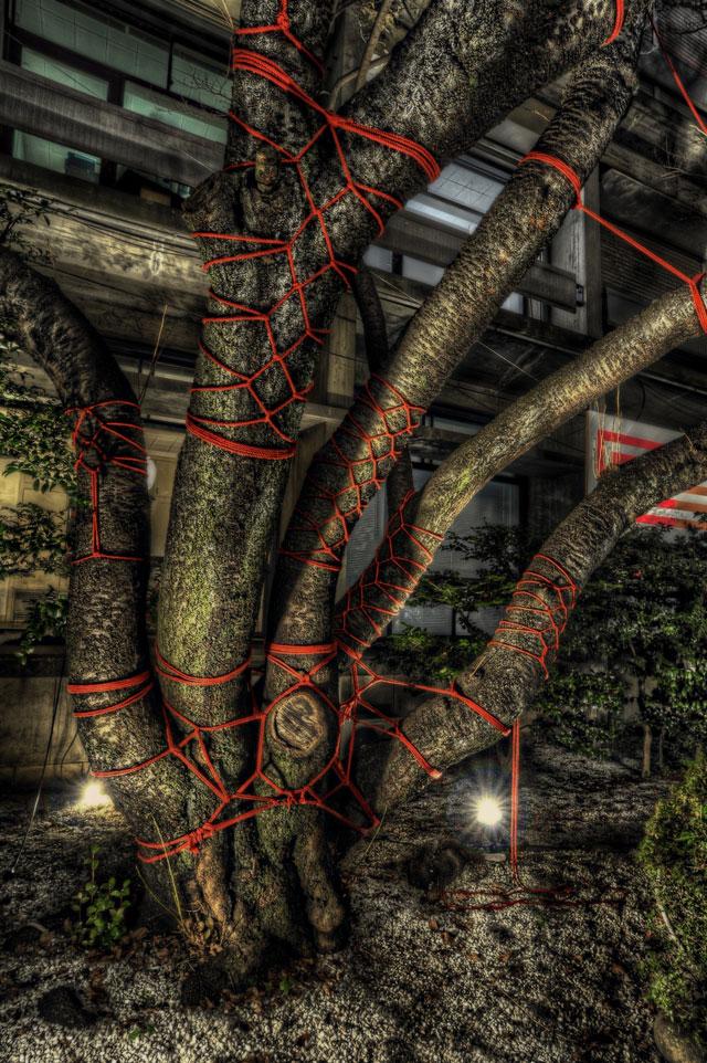 樹木と亀甲縛り@広尾NO MAN'S LAND