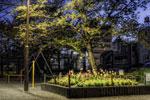 明け方の公園@田端