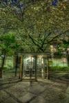 夜桜HDR@教育の森公園