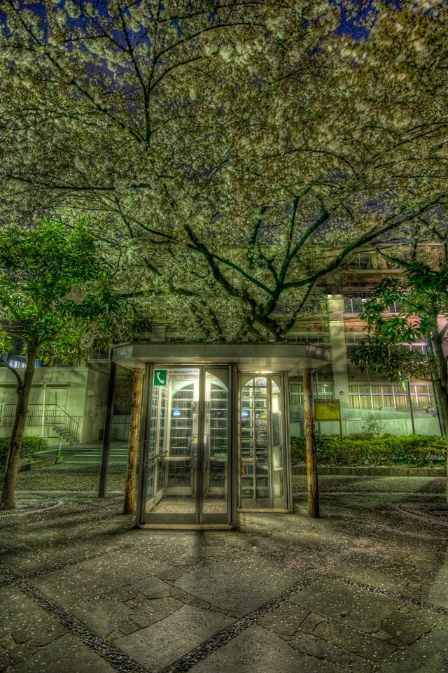 HDR(ハイダイナミックレンジ)夜桜HDR@教育の森公園park23.jpg