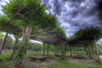 ハイダイナミックレンジ写真 - 季節外れの藤の花@浜離宮恩賜庭園