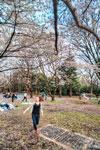 ハイダイナミックレンジ写真 - 花見ごろ@代々木公園