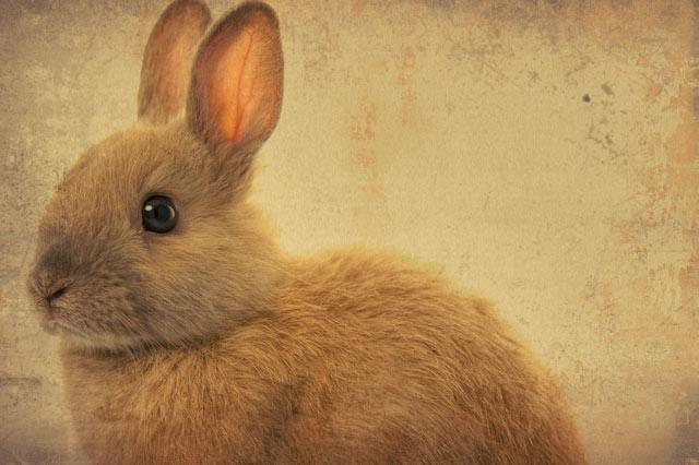 HDR(ハイダイナミックレンジ)草食動物ノ心得rabbit005.jpg