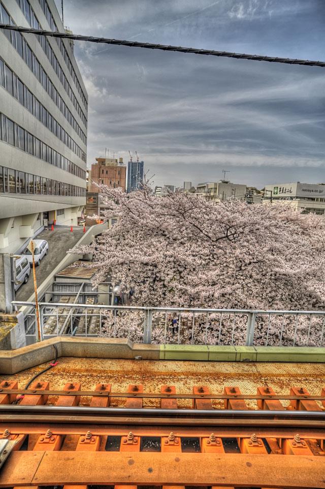 今年最後の桜かな@中目黒駅