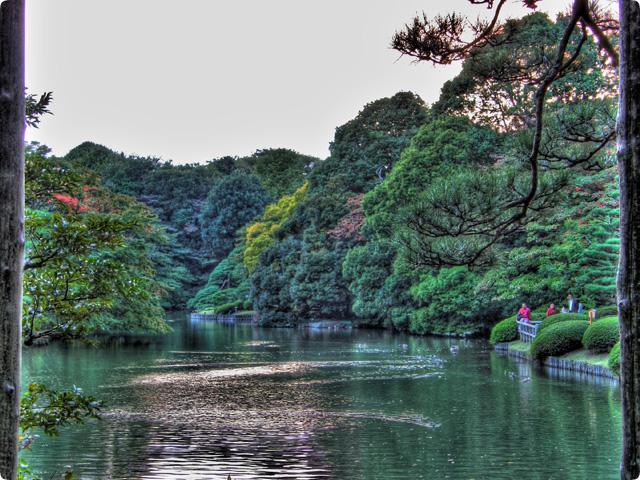 HDR(ハイダイナミックレンジ)ウッディーファインダ@六義園trees09.jpg