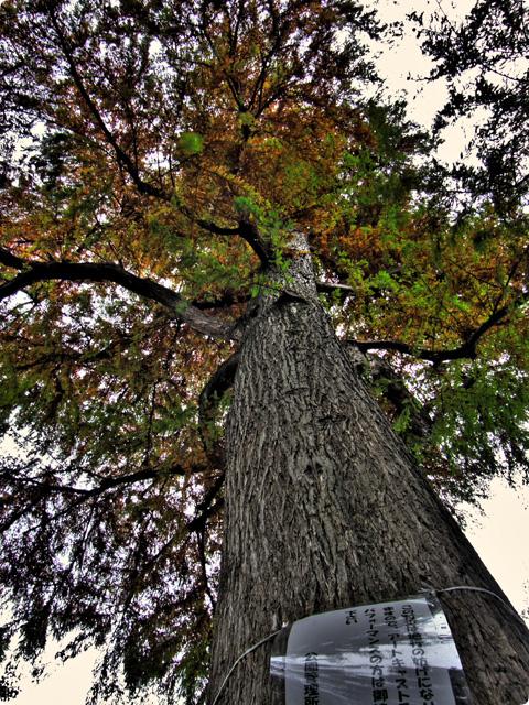 HDR(ハイダイナミックレンジ)trees11.jpg