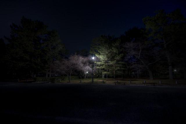 HDR(ハイダイナミックレンジ)ヒストグラム上、黒はほとんどないんですよ@京都御苑trees25.jpg
