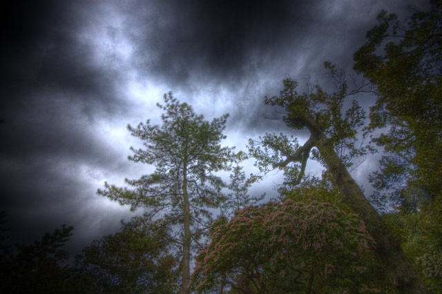 HDR(ハイダイナミックレンジ)どこぞの山頂辺り上を見上げる@京都trees30.jpg