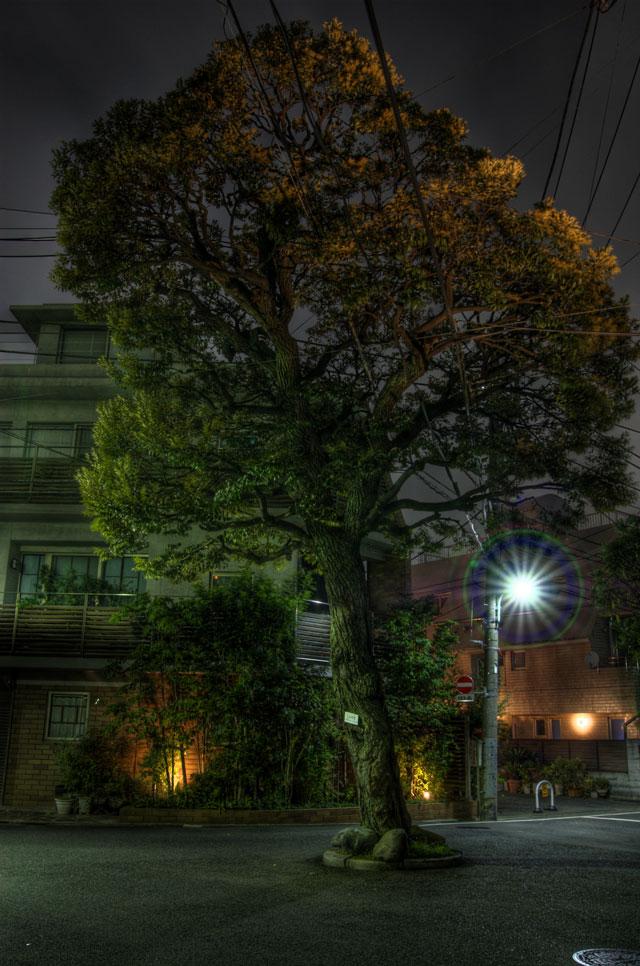 HDR(ハイダイナミックレンジ)交差点の気になる木@中目黒trees34.jpg