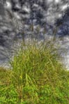 ハイダイナミックレンジ写真 - 津南キャンプ場の空と雲と