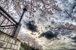 ハイダイナミックレンジ写真 - 桜がまだ残ってた@荒川遊園