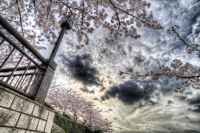 桜がまだ残ってた@荒川遊園