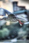ハイダイナミックレンジ写真 - 水鳥を上手く捉えるのに最適な条件