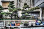 ハイダイナミックレンジ写真 - 日本は中二病患者で蔓延している