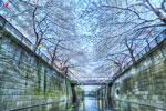 ハイダイナミックレンジ写真 - 個人的桜だより-その2@中目黒は目黒川