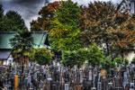 ハイダイナミックレンジ写真 - うっそうとした木々@中目黒正覚寺