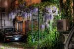 垂れる藤 こぼれる光 室外機@新三河島